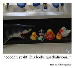 Allison Jusick Aqua duckies dont fear sharks.jpg