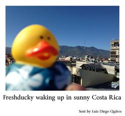 Luis Diego Quiros Freshducky in a sunny Costa Rica.jpg