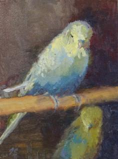 Armani - watercolor budgie
