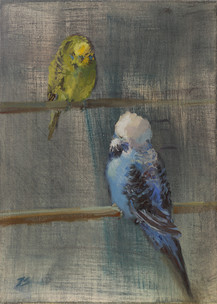 Chattering budgies
