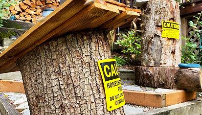 Hoyt Arboretum Log Hive