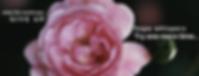 Hope black rose .png