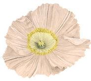 creative scottish wedding florist