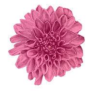 alternative scottish events florist