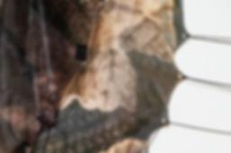 Neringa_5_c.jpg