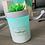 Thumbnail: Succulent Plant Diffuser