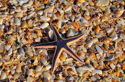 starfish-1617555_1280.jpg