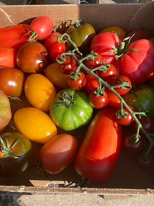 Isle of Wight Heritage Tomatoes