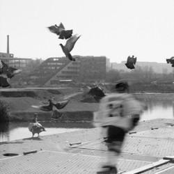 pigeonhockeyF