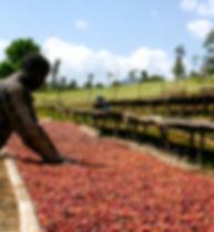 ethiopia-coffee-organic.jpg