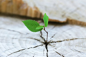 Beautiful seedling growing in the center trunk as a concept of new life.jpg