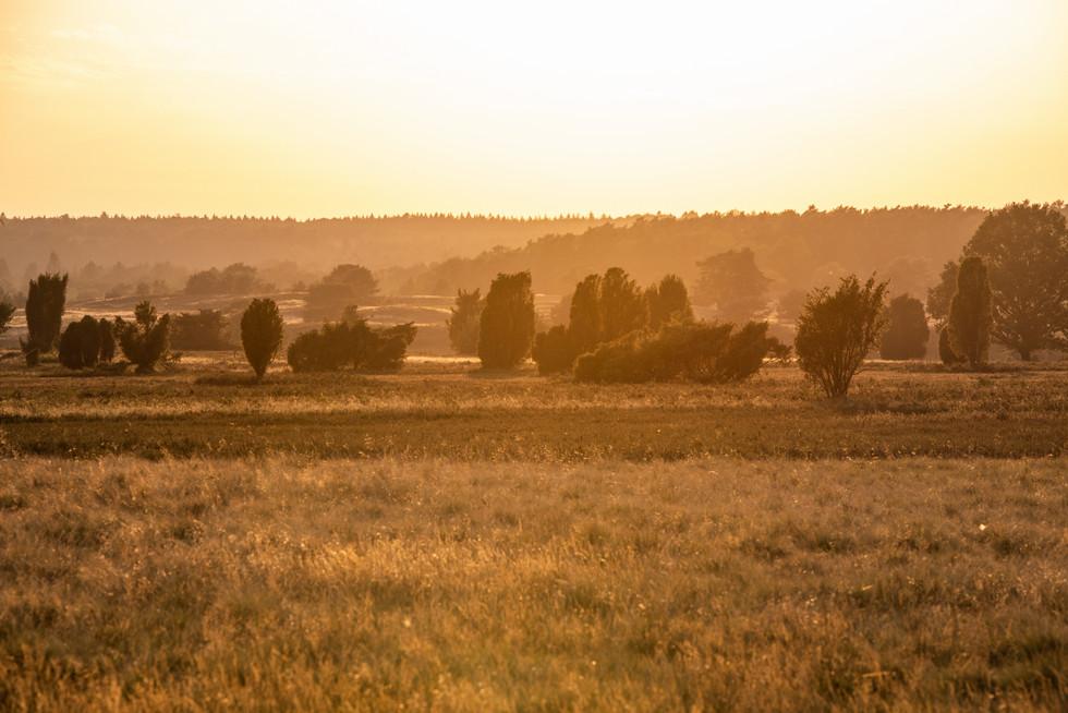 Lüneburger Heide - Outdoor Fotografie