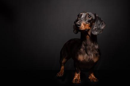 hipdogsfotodaga--13.jpg
