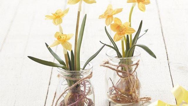 Mini Daffodil Bulb Artificial (Narcissus) In Glass Jar