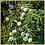 Thumbnail: Weekend Wander - Eco Wax Melts - 12 Pack (48hrs)