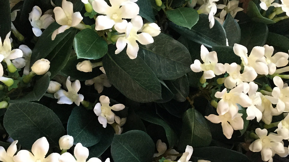 Artificial Stephanotis - 3 Stems