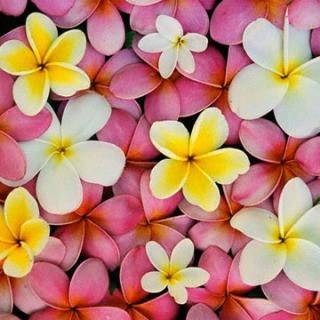 s_gardenia.jpg