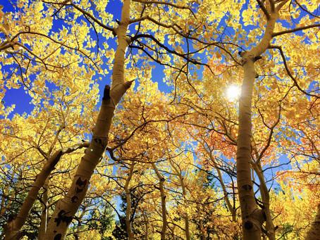 Nov 1 Leadership Tree Walk