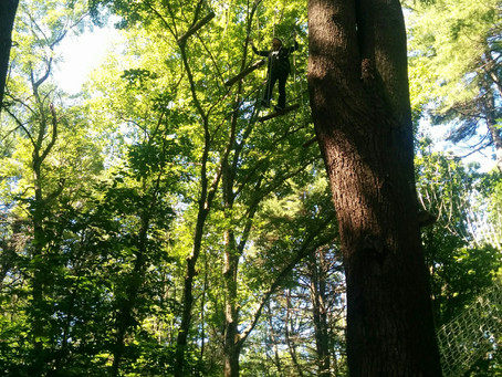 Courage: A True Tree Story