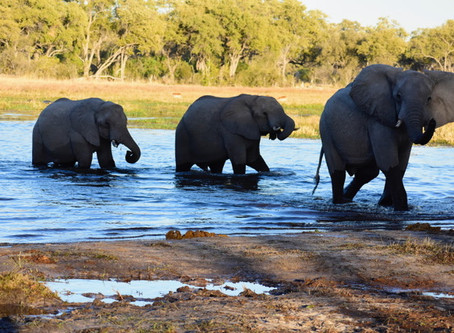 What I Learned from Elephants