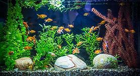 熱帯水族館