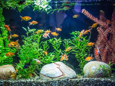 Top 5 Tips For Aquarium Beginners