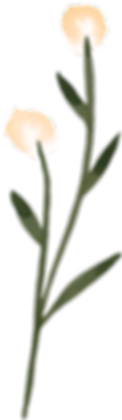 EP_Wildflowers_Ind_17.png