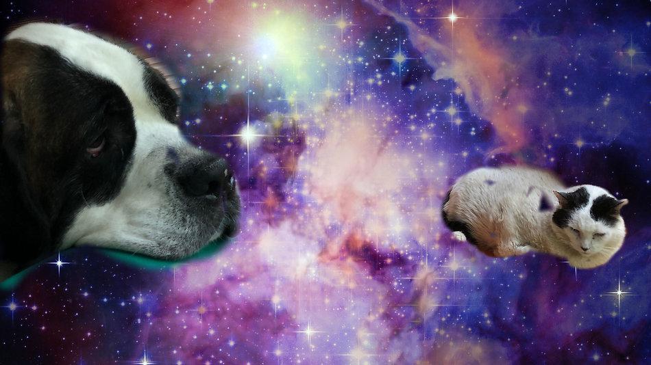 cat dog space.JPG