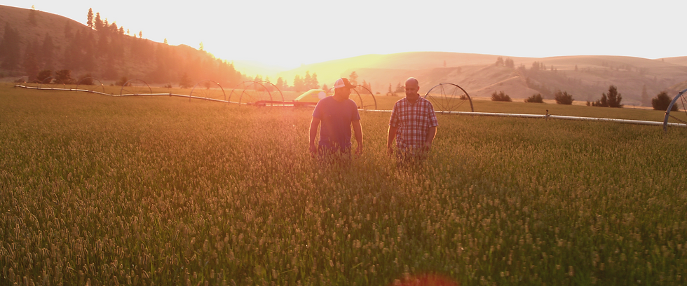 Farming Video Commercial at Sunset