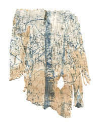 "Christine Lenzen  ""In the Woods"" Cyanotype on Birch Bark"