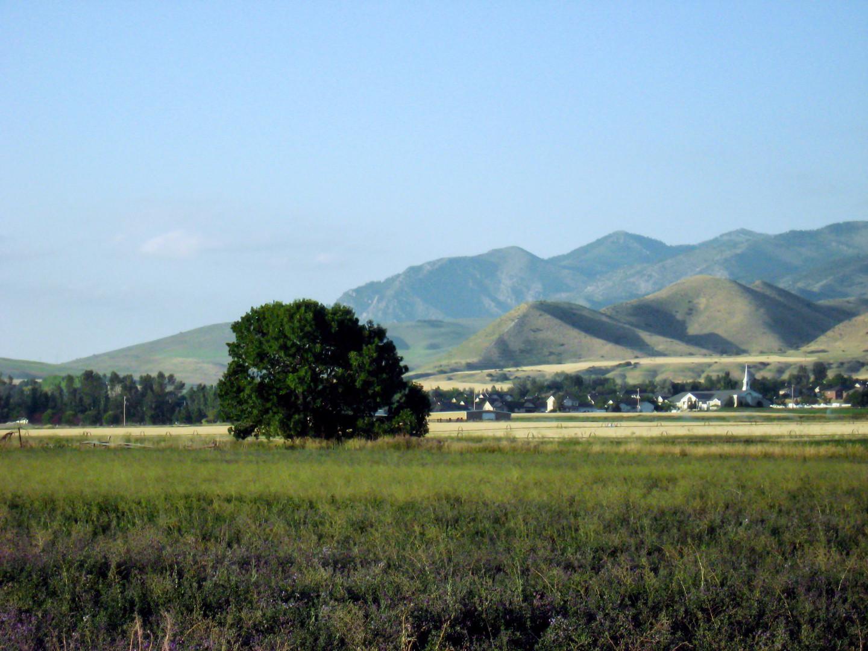Summer Tree in Field