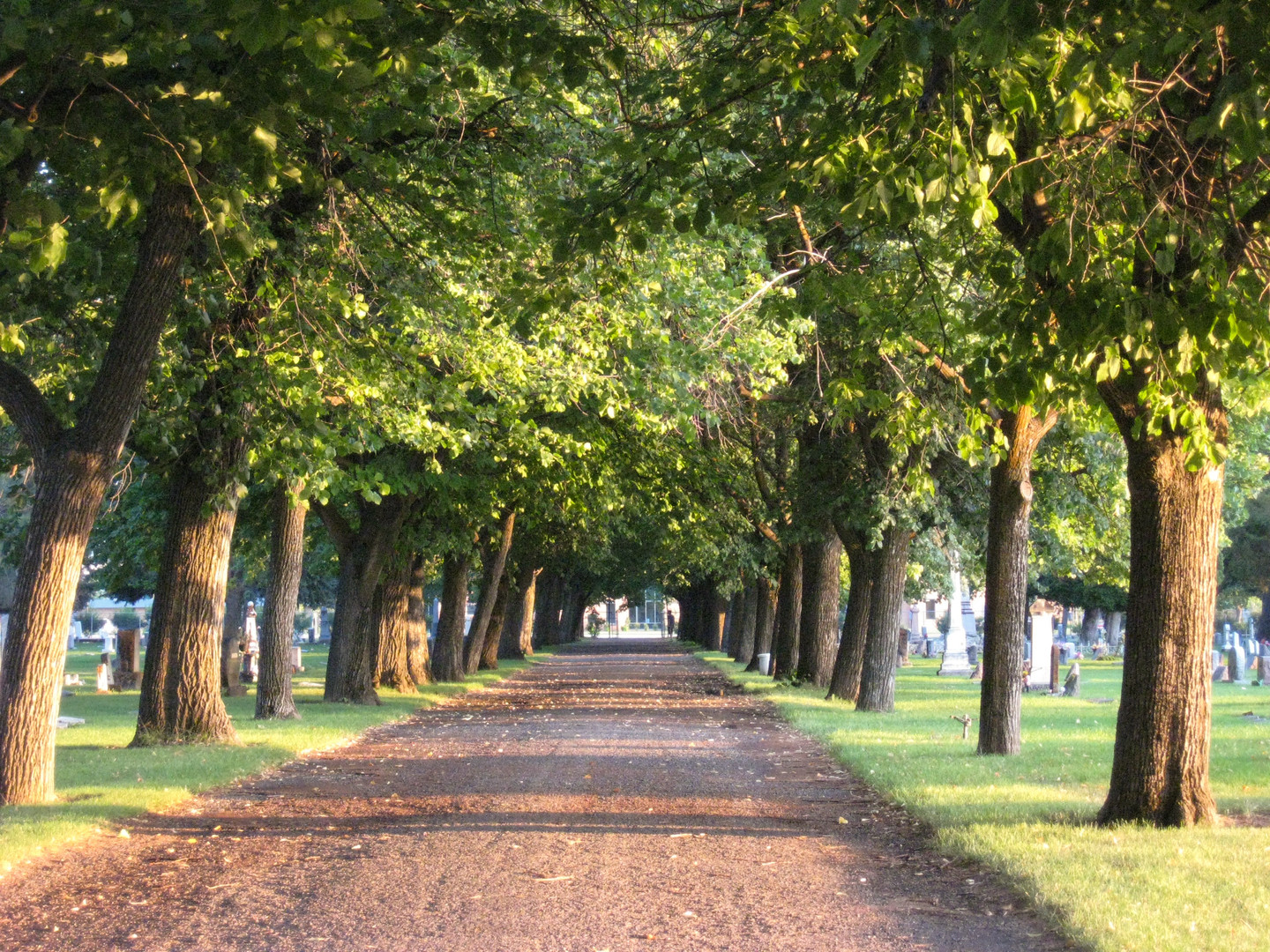 Road Bordered by Trees