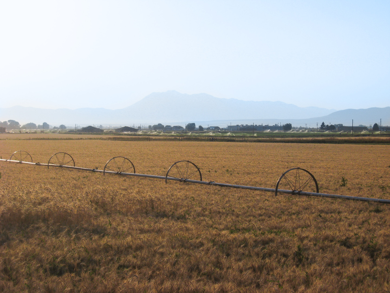 Irrigating Wheat in Fall