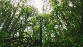 ¿Es necesaria una dimensión ecológica?