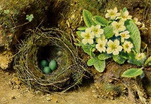 50239-William Hunt Birds Nest Luke 9 Chr