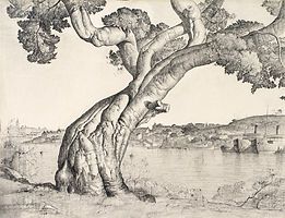 today16362-Lloyd Rees Fig tree Luke 13.j