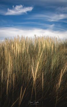 Wenduine_DeHaan_Grass_Abstract.jpg