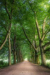 Summer Treelane