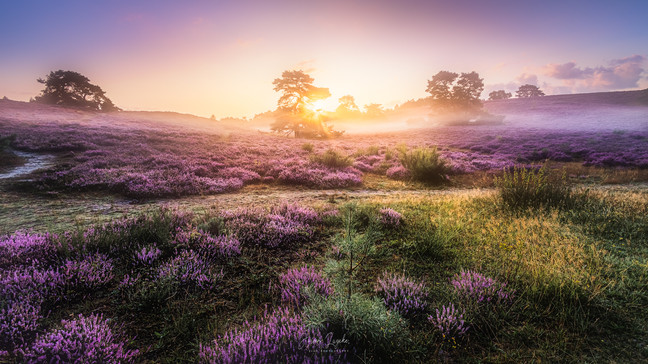Brunsumerheide_Sunrise.jpg