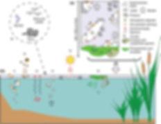 Microlayer_Schematic.jpg