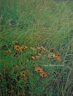 jimi hendrix memorabilia 1969/program woodstock  1969