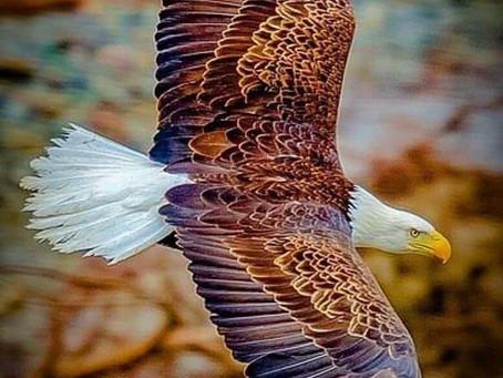 Your Eagle Spirit