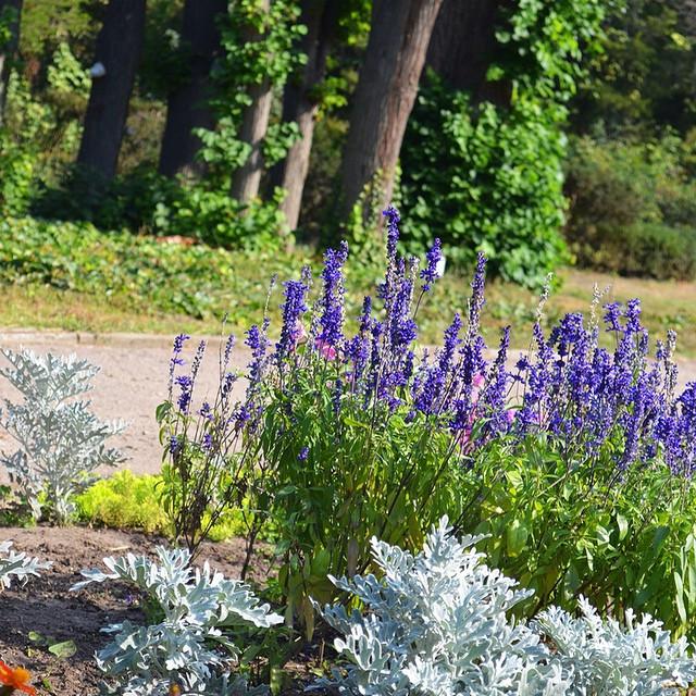 Ботанический сад, Одесса.