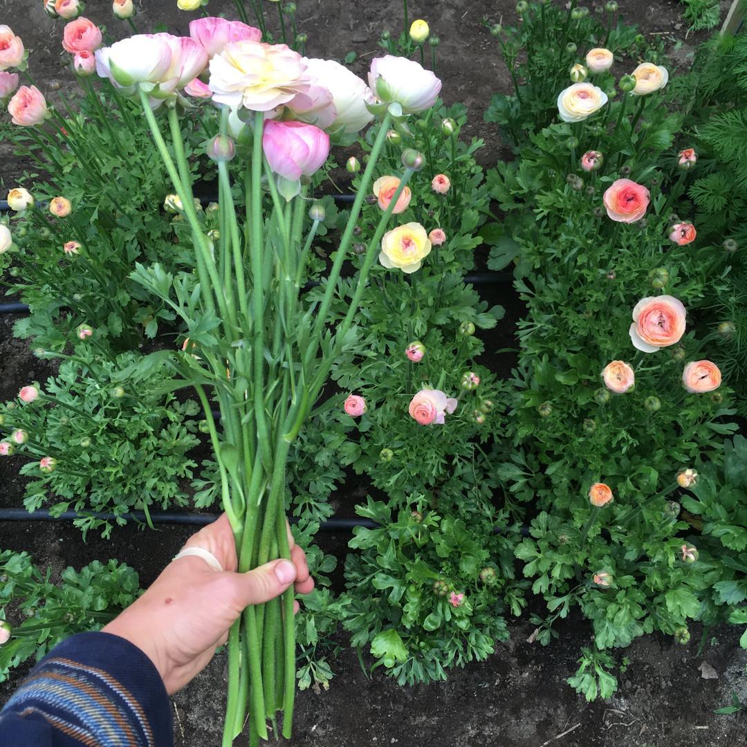 Swell Farm flower 6.jpg