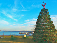 Rockland maine christmas lobster tree.jp