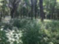 McKee Marsh woods.jpg