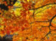 Fall0915.jpg