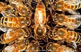 Bee Your Best Self