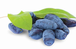 Haskap-berries-635x357.jpg