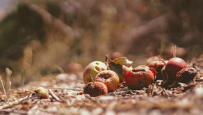 Les biodéchets, ces trésors organiques
